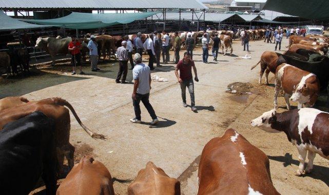 Elazığ'da kurbanlık satışları devam ediyor