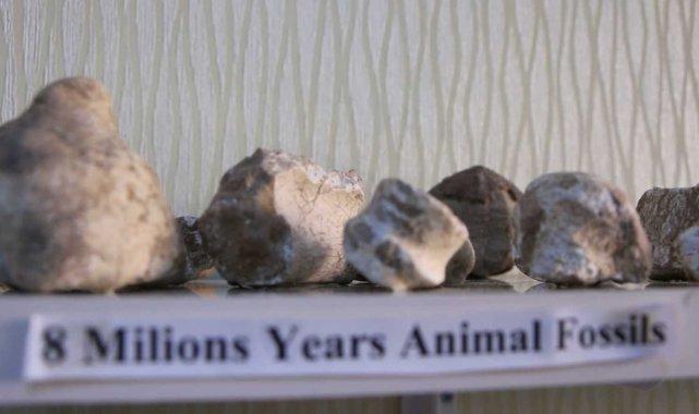 Elazığ'da 8 milyon yıllık hayvan fosilleri sergileniyor