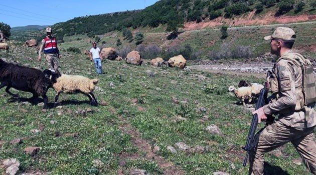 Jandarma, kayıp Hayvanları Buldu