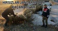 JANDARMA EKİPLERİ, ELAZIĞ'DA ÇALINAN 40 KOYUNU DİYARBAKIR'DA BULDU